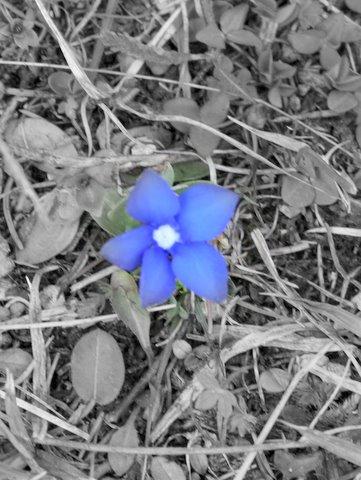 Kwiatek na dzień mamy