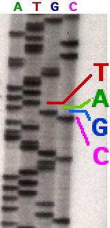 sekwencja genomu